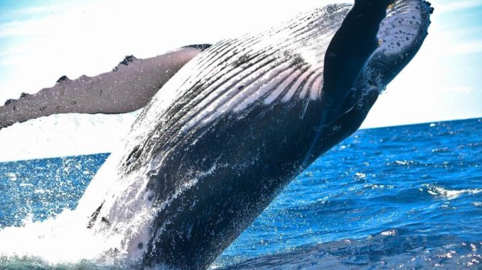 Bitcoin Whales Sold 50k BTC Worth $3B in the Last 5 Days