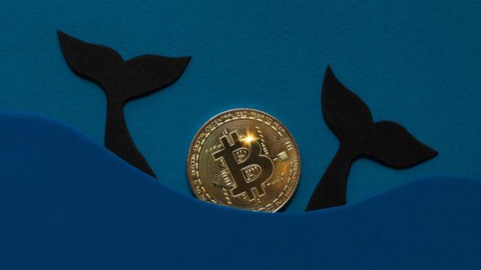 'Millionaire' Bitcoin Whales Accumulates Extra 90,000 BTC